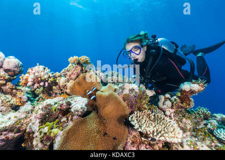 Female diver looking at anemonefish at St Crispin Reef, Great Barrier Reef Marine Park, Port Douglas, Queensland, Australia