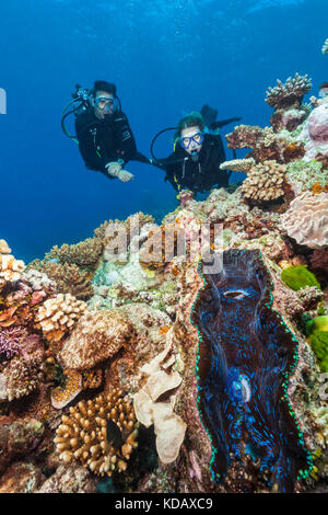 Divers looking at a giant clam and coral formations at St Crispin Reef, Great Barrier Reef Marine Park, Port Douglas, - Stock Photo