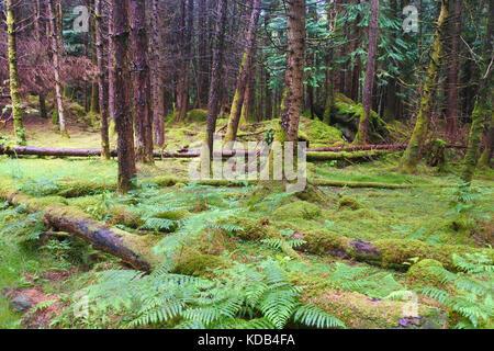 Cashelkeelty Woods, Ardgroom, County Cork, Ireland - John Gollop - Stock Photo
