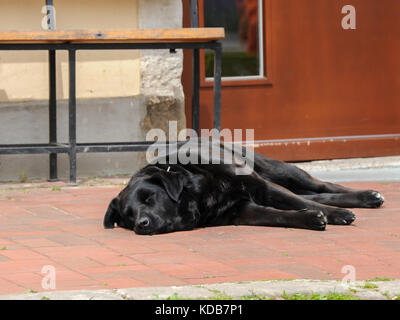 Black, big dog sleeping on the ground in front of bench and door - Stock Photo