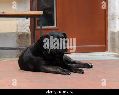 Black, big dog resting on the ground in front of bench and door - Stock Photo