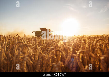 Combine harvester on the field at sunset - Stock Photo