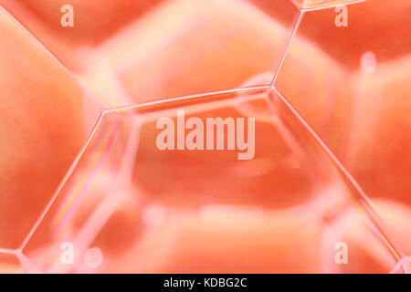 Soap Bubbles Close Up, an abstract macro studio photograph of soap bubbles in water. - Stock Photo