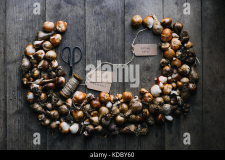 Tulip and daffodil bulbs styled in the Fall before planting them for Spring flowering in the garden where they will - Stock Photo