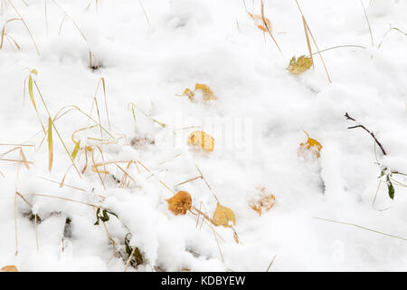 The first snow is lying on the autumn leaves. Reference picture. - Stock Photo