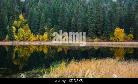A quiet mountain lake with cattails along the shoreline showing reflection of Autumn colors mixed with evergreen - Stock Photo