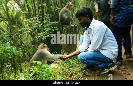 Young man feeding a monkey - Stock Photo