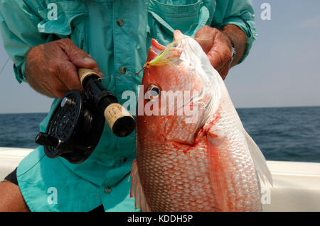 A fly fisherman holds a red snapper caught while fly fishing offshore from Freeport Texas - Stock Photo