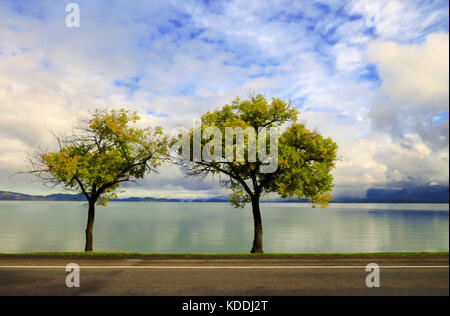 Small fall trees isolated on a clear, smooth still lake. - Stock Photo