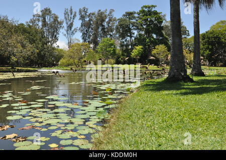Lakes in Anderson Park Botanical Gardens, Townsville, Queensland ...