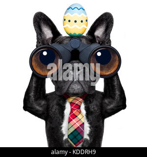binoculars french bulldog dog with  easter  egg  ,isolated on white background - Stock Photo