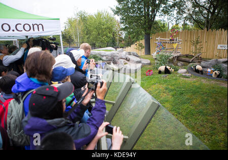 Toronto, Oct. 13. 13th Oct, 2015. Visitors take photos of giant panda twins during their 2nd birthday celebration - Stock Photo