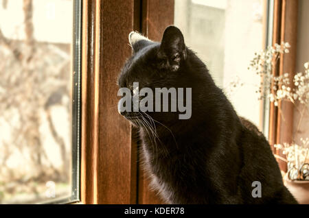 Home black cat sits on the windowsill and begging on the street - Stock Photo