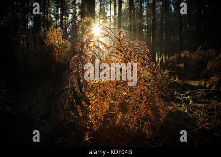 Low glow in the ferns - Stock Photo