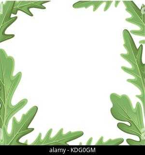 Set of arugula rucola, rocket salad fresh green leaves and outlines isolated over white background. Vector hand - Stock Photo