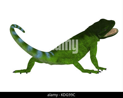 The Chuckwalla is a large lizard found primarily in arid regions of the southern United States and northern Mexico. - Stock Photo