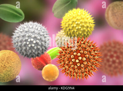 Pollen grains from different plants, computer illustration. Pollen grain size, shape and surface texture differ from one plant species to another, as seen here. The outer wall (exine) of the pollen in many plant species is highly sculpted which may assist in wind, water or insect dispersal. This pollen sculpting is also used by botanists to recognise plant species. Pores in the pollen wall help in water regulation and germination. These reproductive male spores produced by seed plants contain the male gametes. Pollen fertilises the female egg, with subsequent formation of plant seeds.