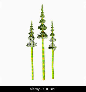 Tall Carboniferous Pine - The earliest conifers date to the Carboniferous Period possibly arising from the Cordaites, - Stock Photo