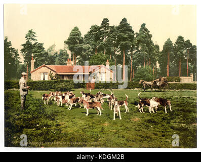 Royal Staff College, drag hounds, Camberley, England LCCN2002696443 - Stock Photo