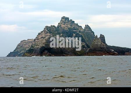Little Skellig Island with large colony of norhern gannets (Morus bassanus), County Kerry, Ireland - Stock Photo