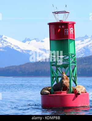 Stellar Sea Lions resting on buoy in Juneau, Alaska with snow capped mountain background - Stock Photo