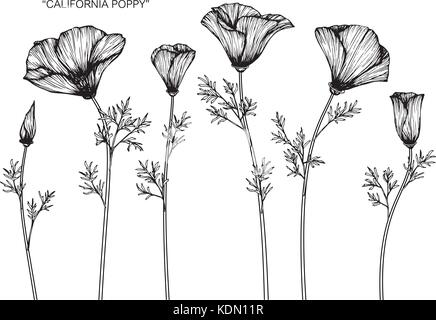 California poppy flower drawing illustration black and white with california poppy flower drawing illustration black and white with line art stock photo mightylinksfo