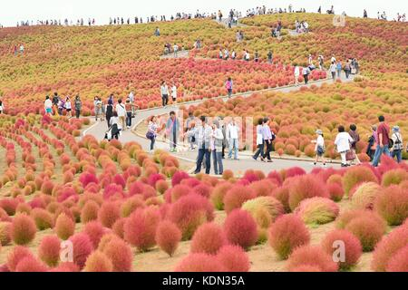 Crowd enjoying Autumn Landscape at Hitachi Seaside Park, Japan. During Autumn this park is famous for Red Moss bushes. - Stock Photo