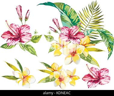 Big Set Watercolor collection with tropical plants elements - leaf, flowers. Botanical illustration isolated on - Stock Photo