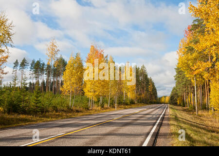 Asphalt road in the autumn forest on a bright sunny day - Stock Photo