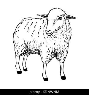 sleeping sheep coloring pages - photo#34