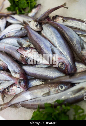 pile of fresh sprat fishes laying on the ice on the market - Stock Photo