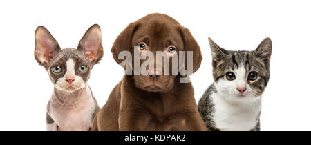 Close-up of cats and dog, isolated on white - Stock Photo