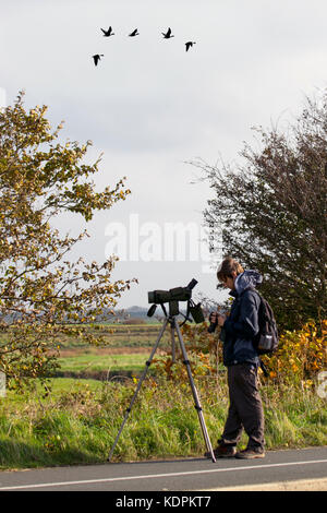 Southport, Merseyside, UK Weather 15th October, 2017. Migratory birds arrive in huge numbers. This autumn wildlife - Stock Photo