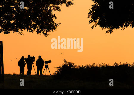 London, UK. 15th October, 2017. Parakeets fly past as photographers wait for the sunrise at Richmond Park, London, - Stock Photo