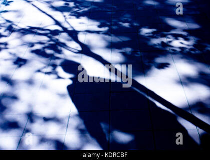 Blurry shadow of a man and a tree on city street in the night - Stock Photo