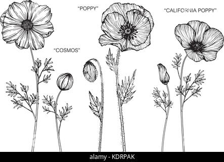 Bouquet of poppy flowers drawing stock vector art illustration cosmos poppy california poppy flower drawing illustration black and white with line art mightylinksfo