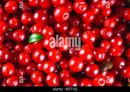 Cowberry, foxberry, cranberry, lingonberry texture, top view. - Stock Photo