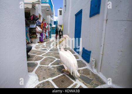 Pelikan Petro, Rosapelikan (Pelecanus onocrotalus) spaziert in einer Gasse mit Souvenir-Geschaeften, Mykonos-Stadt, - Stock Photo