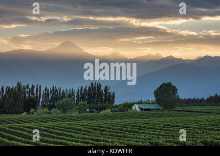 the Andes from the vineyards of the Uco Valley nr Tupungato, Mendoza Province, Argentina - Stock Photo