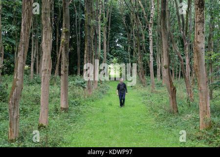 Walking in North Wood, Livingston, Scotland.  Summer. - Stock Photo