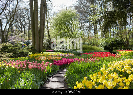 Keukenhof gardens in Holland, famed for its Spring displays of tulips, hyacinths and daffodils - Stock Photo