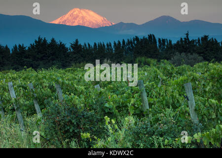 First light on Volcan Tupungato from the vineyards of the Uco Valley, Mendoza Province, Argentina - Stock Photo