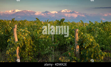 First light on the Andes from the vineyards of the Uco Valley, Mendoza Province, Argentina - Stock Photo