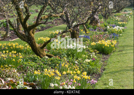 Hergest Croft Gardens, Kington, Herefordshire, UK. Spring borders with old apple trees - Stock Photo