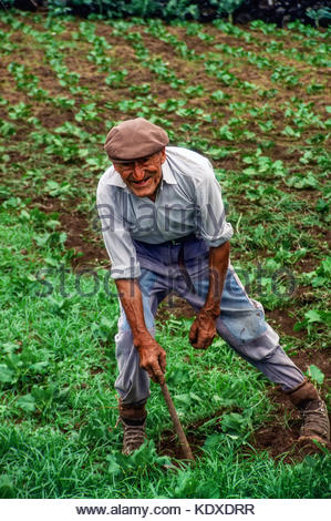 An old Azorian man in his 90s works outdoors in his vegetable garden on Terceira Island in the Azores. He is cultivating - Stock Photo