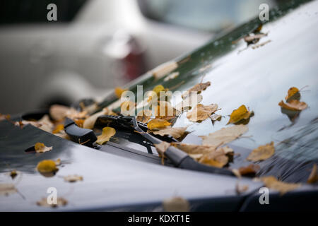 colored autumn leafs fallen from tree on the car  - Stock Photo