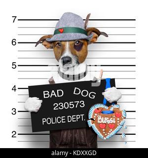 mugshot bavarian dog with a police banner stock photo 163474535 alamy. Black Bedroom Furniture Sets. Home Design Ideas