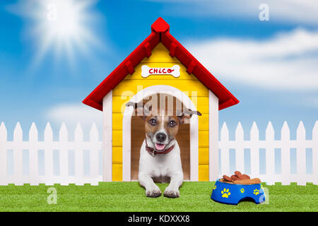 dog living in his own colorful home - Stock Photo