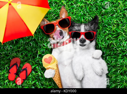 couple of dogs in love very close together lying on grass under the umbrella at the park eating ice cream and hugging - Stock Photo