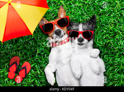 couple of dogs in love very close together lying on grass under the umbrella beside flip flops - Stock Photo